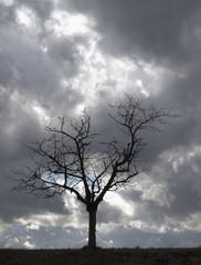 Stimmungsbaum