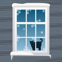 Cat near windows in winte