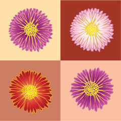 Four Chrysanthemums.