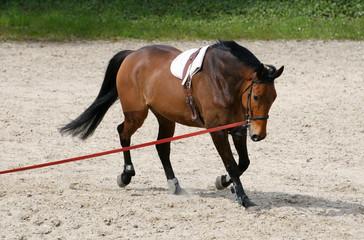 cheval à l'entraînement