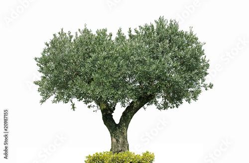oliver centenaire photo libre de droits sur la banque d 39 images image 20987155. Black Bedroom Furniture Sets. Home Design Ideas