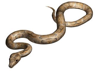 Snake isolated