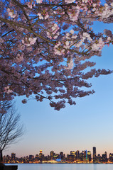 Foto op Canvas Kersenbloesem Cherry blossom and downtown Vancouver