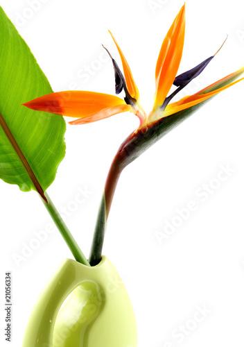 Fleur Oiseau Du Paradis Feuille Vase Fond Blanc Photo Libre De