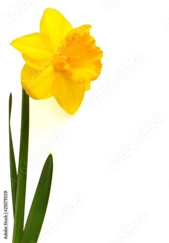 Nom De Fleur Jaune En 8 Lettres Petite Fleur Blanche 5 Petales Vap Vap