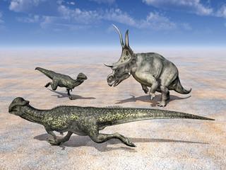 Diabloceratops und Stegoceras