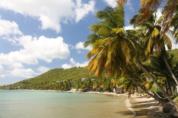 Beach with palm trees on St. Lucia in the Caribbean
