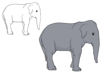 vector - a elephant puppy isolated on background