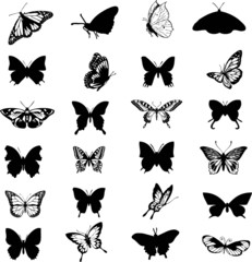 Butterfly Vector Collage