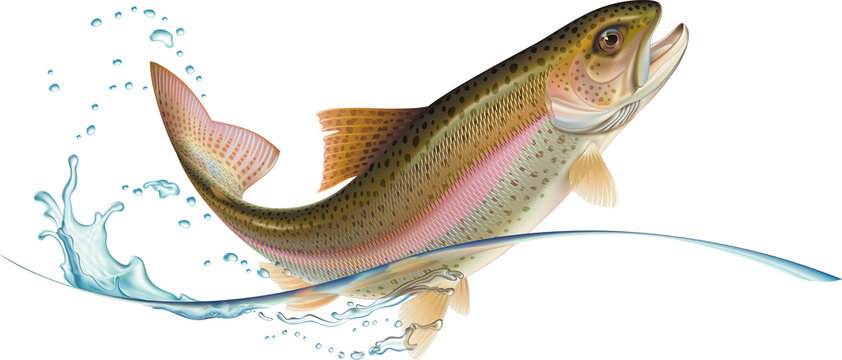 Jumping trout