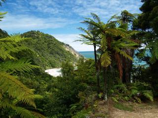 beach and rainforest on southern island in new zealand