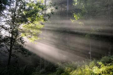 Light shaft through trees