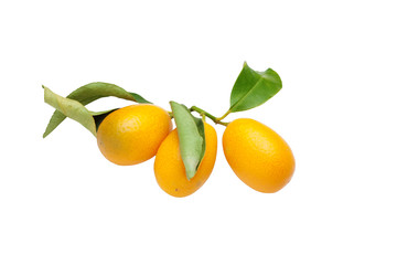 kumquat fruits on white background