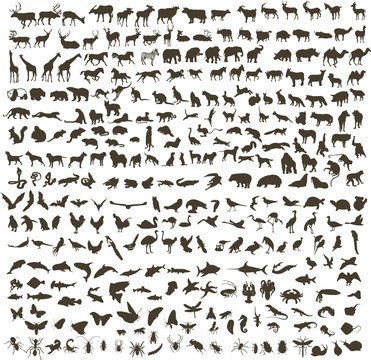 300 silhouettes of animals