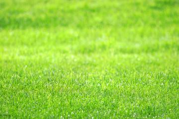 pelouse bien verte avec la rosée du matin