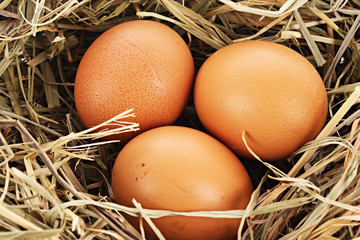 Bird nest with three eggs isolated on white.