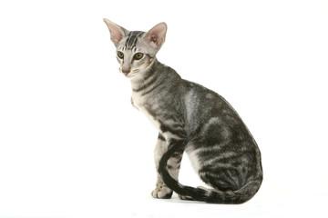 jeunes blanc chatte pics réel amateur femme tube