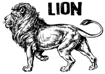 vector illustration tattoo - lion