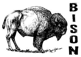 vector illustration tattoo - bison