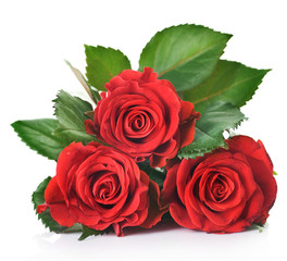 Beautiful red Roses over white