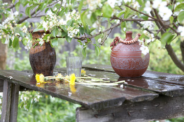 jugs on a background blossoming pear tree