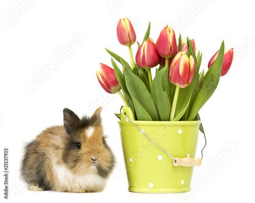 Baby kaninchen und blumentopf stockfotos und lizenzfreie for Blumentopf tiere