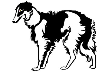 borzoi dog the silhouette