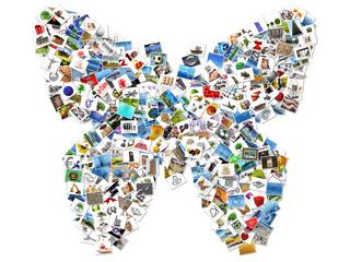 papillon en images
