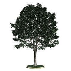 Baum - Linde