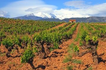Languedoc Roussillon,Weinstöcke, Pyrenäen,Frankreich