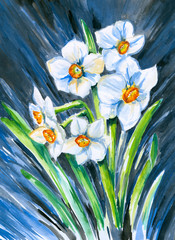 Narcissus watercolor painted.