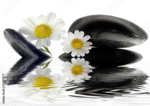 steine mit blume spiegeln sich im wasser stockfotos und lizenzfreie bilder auf. Black Bedroom Furniture Sets. Home Design Ideas