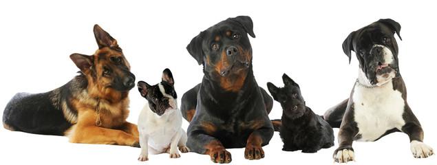 cinq chiens différents de face dans la même position