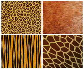 set of fur backgrounds