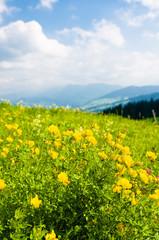 Fototapete - Blumenwiese im Sommer, Voralpenland, Erholung