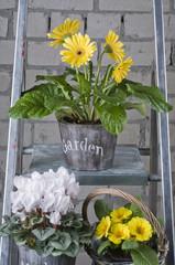 Spring garden  flowers in pots