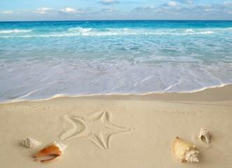 sea shells starfish tropical sand turquoise caribbean