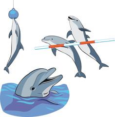 Tuinposter Dolfijnen dolphins