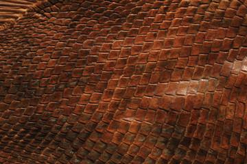 Photo sur Toile Les Textures Fossile Fischschuppen