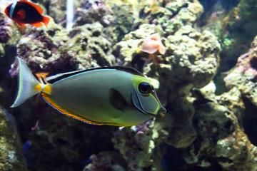 exotic saltwatrer fish