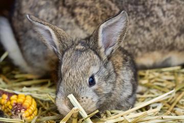 rabbit34