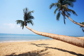 palm beside sea in sanya china