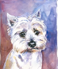 Maltese dog watercolor painted