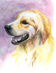 Labrador golden retriever watercolor painted.