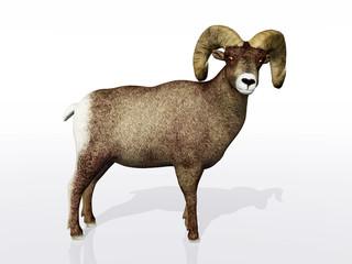 Horn Schaf