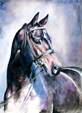 Black horse watercolor painted.