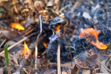 Flowers and Fire 11