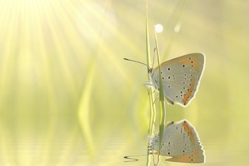 Butterfly resting on grass at sunrise