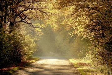Keuken foto achterwand Bos in mist Country road through the autumn forest at sunset