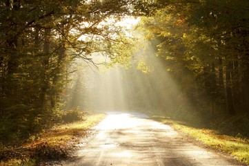 Country road through autumn forest at sunrise